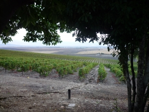 Sherry vineyards