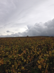 Clos St-Hilaire Vineyard, Billecart-Salmon