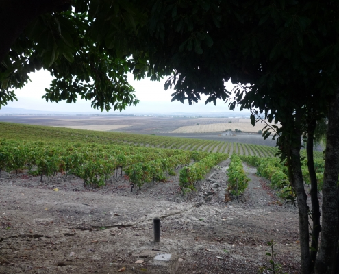 Sherry vineyards